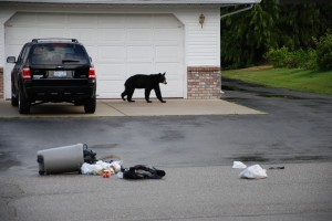 Garbage Bear